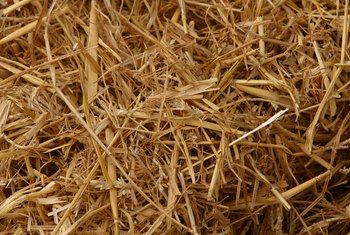 Straw keeps the soil in a newly planted lawn moist and warm.