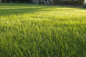Lawns benefit from regular fertilization.