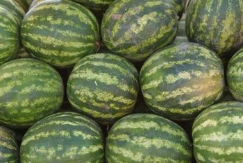 Some diseases can stunt the growth of watermelons.