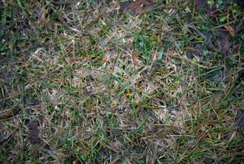 Damp areas with a thick layer of thatch are ripe for growing mold.