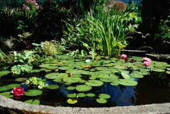 Artificial pond plants can combine with living plants to augment a pond's appearance.
