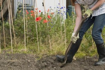 Work the soil before transplanting potted plants to loosen it.