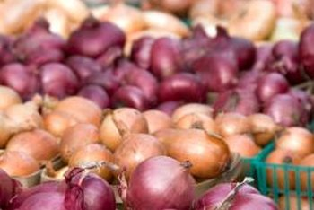 Onion seeds do not produce mature bulbs until the second growing season.