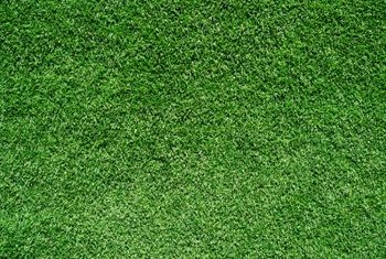 Spreading seed evenly creates a smooth carpet of grass on thin spots.