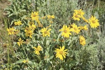 Using native plants gives your landscape a rugged, natural look.