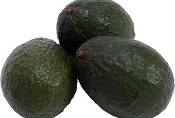 Avocado fruit hangs in large bunches from the tree.