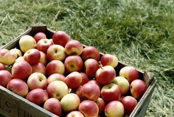 Enjoy a bountiful harvest of apples from a healthy dwarf apple tree.