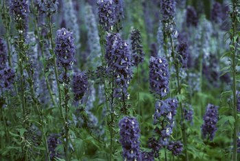 Lavender adds some height as well as fragrance and color to your garden.