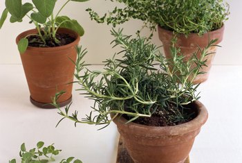 Keep your potted plants gnat-free with the right cultural controls,