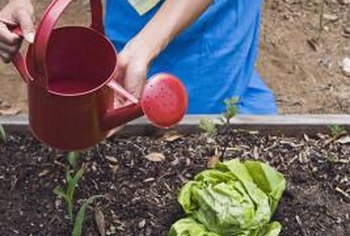 Loam soil's pros and cons depend largely on a garden's plants.