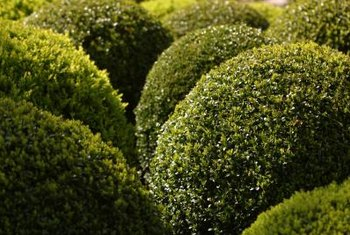 Abstract topiary shapes include domes, cubes and disks.