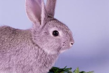 Keep unhealthy and poisonous greens away from bunnies, because they'll eat anything.