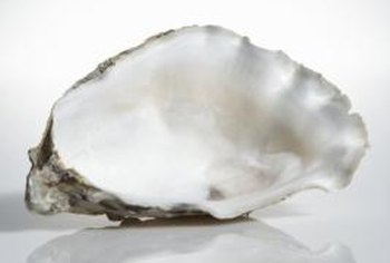 How to Bleach Oyster Shells for Decorating | Home Guides