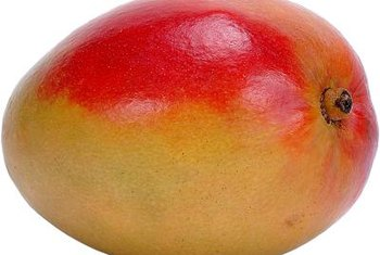 The most flavorful mangos are grown on grafted trees.