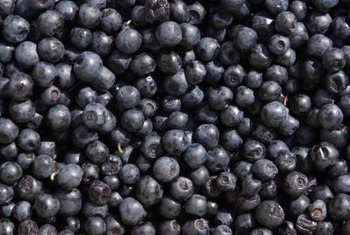 Ripe blueberries are dark blue and purple.