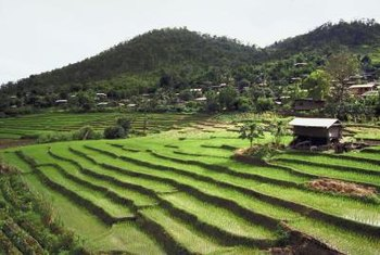 Farmers use terraces to grow crops on hills.