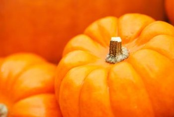 Mildew is a common problem with pumpkins but is easily preventable.