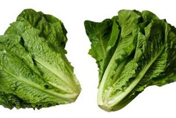 If you're growing romaine lettuce in summer, select green varieties.