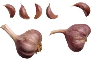 Spanish roja garlic has purple and white stripes.