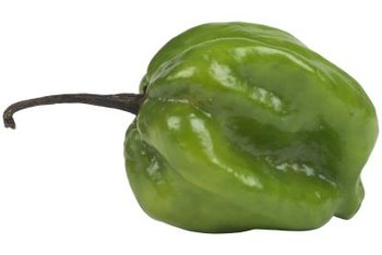 Poblano peppers rate between 1,000 and 1,500 on the Scoville heat scale..