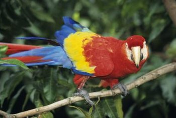 Both parrots and orchids call Central and South American rainforests home.
