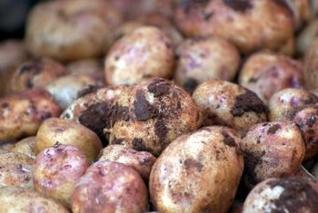 Potato tubers grow underground from small cuttings from seed potatoes.