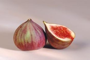 Fig trees from cuttings may take several years to bear fruit.