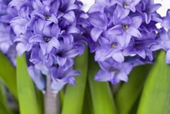 "Old Persian saying: ""if you have two coins use one to buy bread and the other to buy hyacinths to nourish the spirit."""