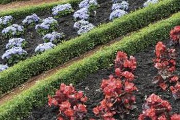 Flowers and plants form intricate patterns in a knot garden.