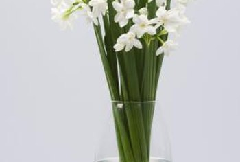 Paperwhites cheer up the house in the winter.