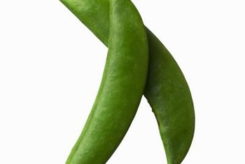 Sugar snap peas have edible, sweet-flavored pods.