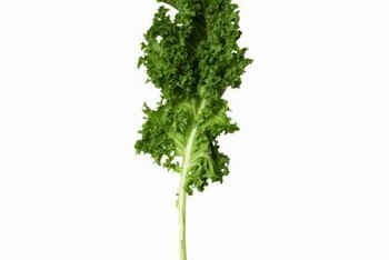 Kale is one of the most nutritious leafy vegetables grown in the home garden.