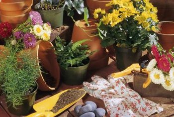 Repotting is a common activity for gardeners with potted plants.