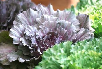 Kale contains compounds that can affect how the thyroid works.