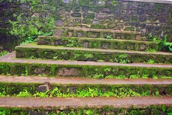 Moss can be decorative, but on stairs it's a hazard.