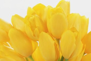 Yellow tulips bring spring color to the third chakra garden area.
