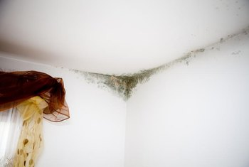 It's best to replace mold-infested drywall.