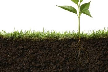 Good-quality soil is essential to healthy plant growth.