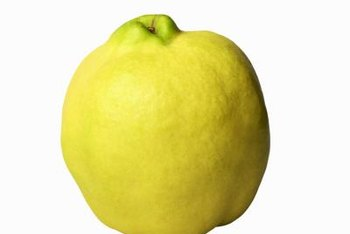 It may look like an apple, but it's a quince and can appear on flowering quince shrubs.