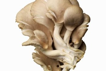 Grow oyster mushrooms on small chunks of clean, sterile straw.