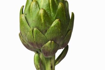 Artichoke plants are Mediterranean-area natives.