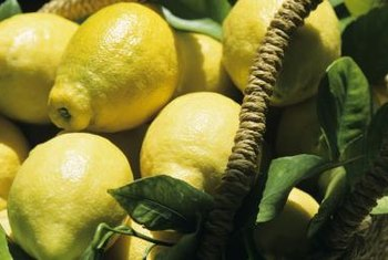 Healthy young lemon trees promise a bright, tasty future.