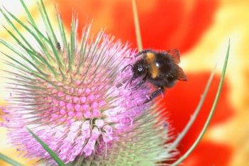 Collecting pollen sprayed with fungicide can cause bees to alter their behavior.