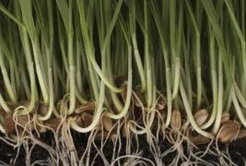 Roots act like sponges to absorb soil moisture.