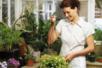 Greenhouse plants need to be protected from harmful insects.