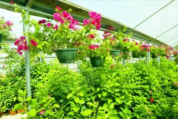 Rounded arches allow more space for hanging plants inside the greenhouse.