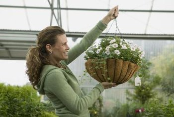Hang baskets lined with coconut fiber outdoors or in a greenhouse.