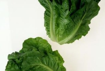 Romaine lettuce is a good source of vitamin A, B and C.