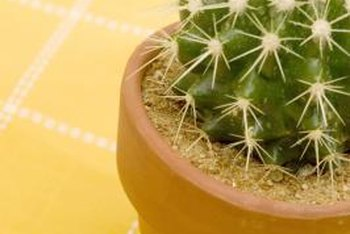 Cactus should be planted in a container with a drainage hole.