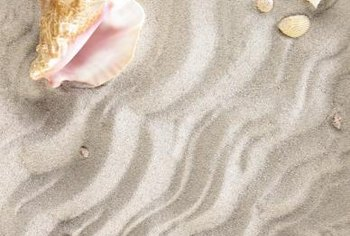 Bring the beach home with you with a seashell display.